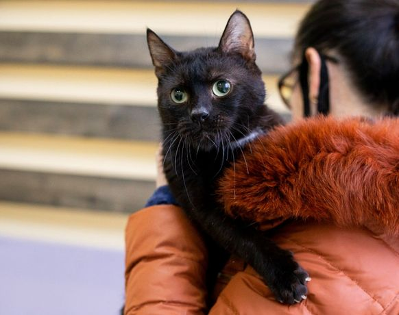 Ласковый котик друг Проша, 4 года, черный, белый, кот