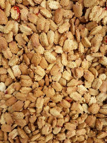 Продам семена момордики