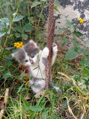 Котик родился 9 августа