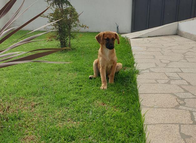 Cãozinho para Adoção Porte Pequeno/Médio
