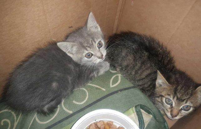 Małe kotki pilnie szukają domu