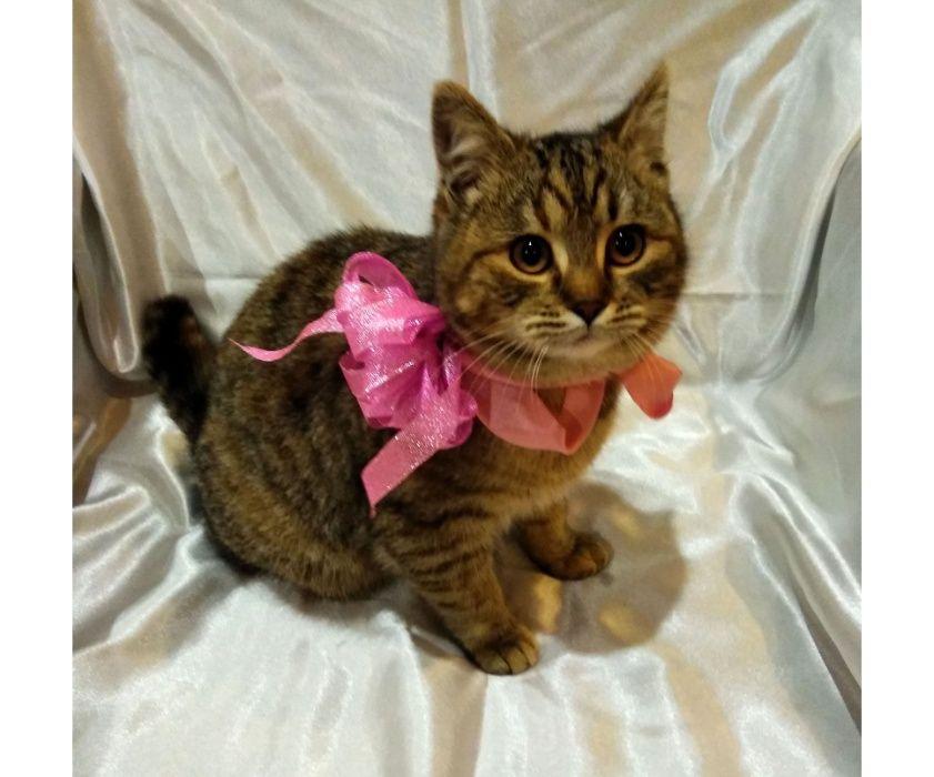 Кошечка Рыська, 6 мес, стерилизацию оплатим Мелитополь - изображение 1