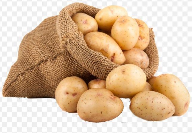Ziemniaki ekologiczne jadalne pyry kartofle