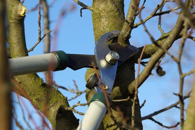 Расчистка приусадебных территорий Вырубка деревьев Уборка дач домов