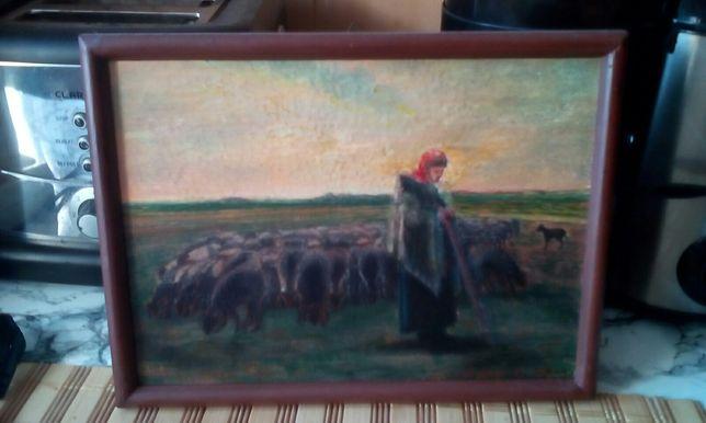 Pasąca owce .