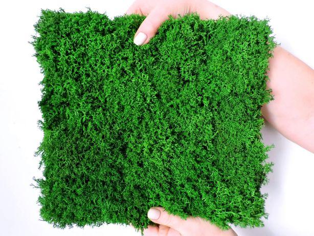 Панели из мха Ягель, Кочки, Плоский. Стены из мха. Озеленение мхом.