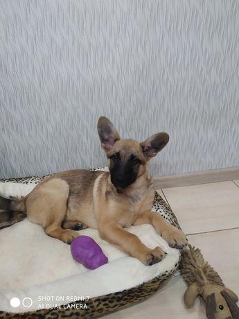 Собачка щенок, средний размер, привита, привезу, стерилизую бесплатно.