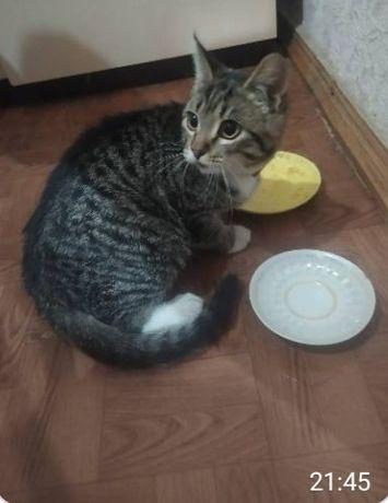 Отдам котёнка лесного окраса ,девочка , 5 месяцев