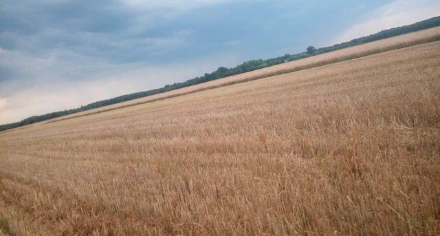 Ziemia rolna w gminie Lutomiersk