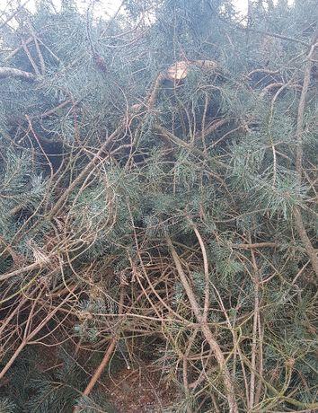 Gałęzie oddam za darmo, pniaki, korzenie