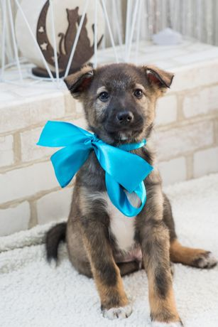 Скромный и стеснительный щенок