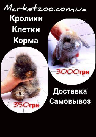 Карликовые мини кролики вислоухие и торчеухие декоративные,клетки,корм