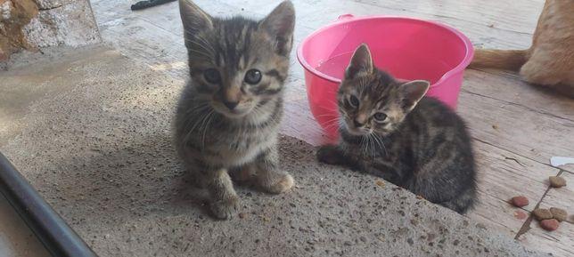 Oddam za darmo kota i kotkę