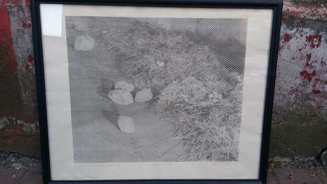 Obraz , grafika , sygn. , wym. ok. 60 x 40 cm .
