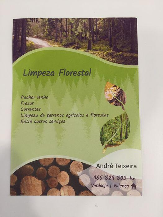 Limpeza de terrenos e venda de lenha Verdoejo - imagem 1