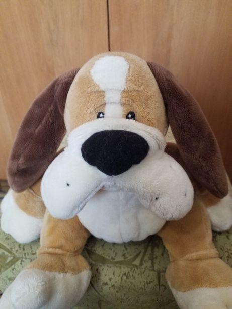 Класснючая собака с красным ошейником