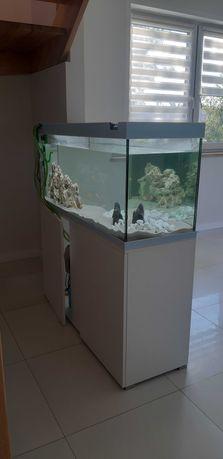 Zestaw akwarium i piękne ryby