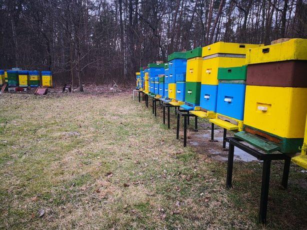 Sprzedam Rodziny Pszczele 2020
