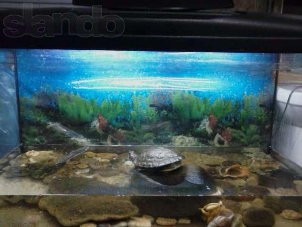 Черепашка красноухая+аквариум