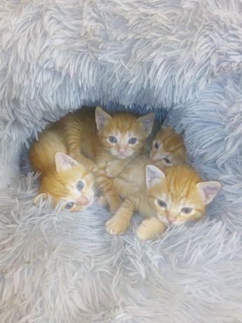 Gatinhos fofinhos amarelos bebes