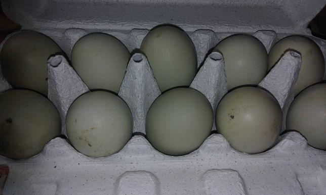 Jajka wiejskie jaja drób kolorowe nioski