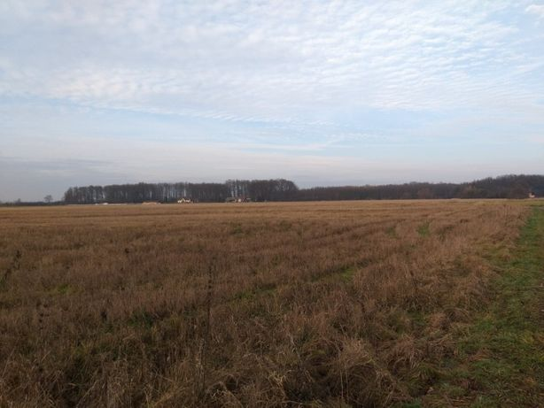 Działka siedlisko 1,48 ha Wola Batorska Niepołomice