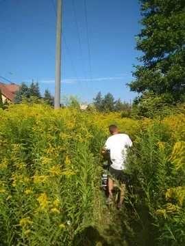 Koszenie traw ,nieuzytkow zielonych kosiarka bijakowa