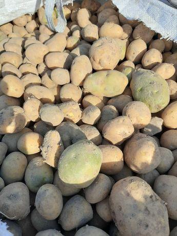 Sprzedam ziemniaki paszowe 100 zł 1 tona