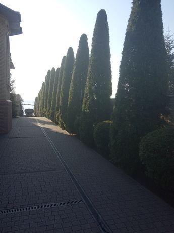 Стрижка/чиська кустов(Туй), озеленение, стилка газона высадка растений