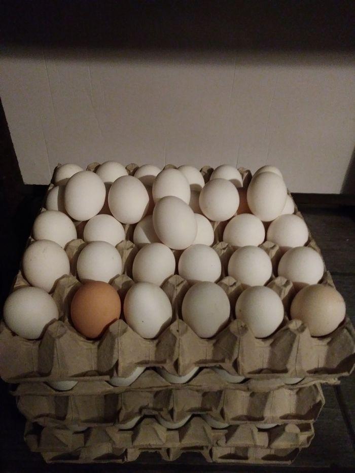 Sprzedam jajka swojskie z wolnego wybiegu  oraz warzywa EKOLOGICZNE Gostyń - image 1