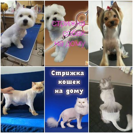 Стрижка котов, собак на дому