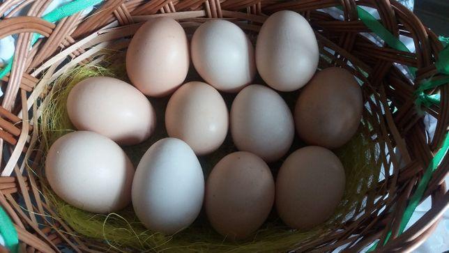 Wiejskie jajka od kur z wolnego wybiegu naturalne