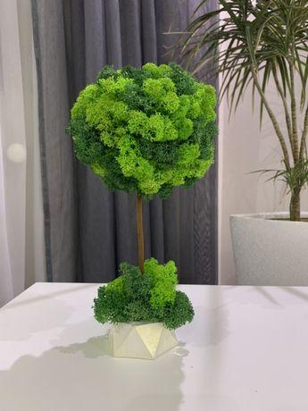 Дерево з стабілізованого моху, стабілізований мох,