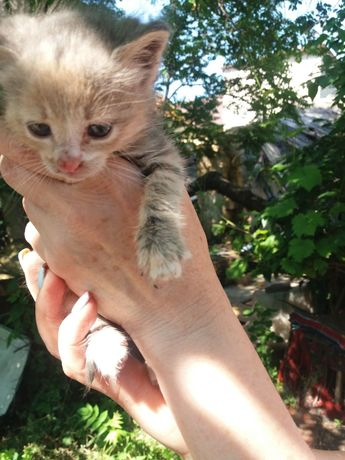 Котенок 1.5 мес бесплатно