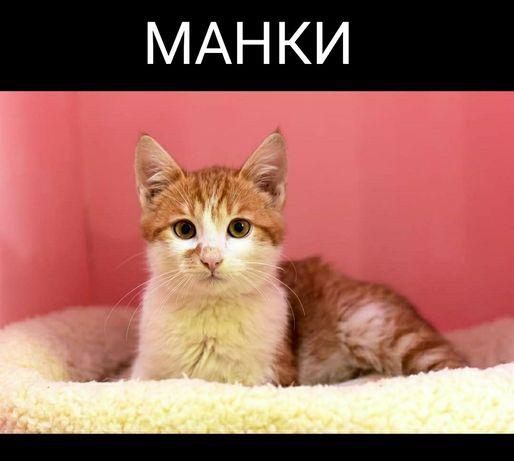 """Мини-приют для котов """"ЛапУсик"""""""