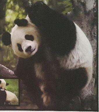 Puzzle WWF Panda 60 elementów