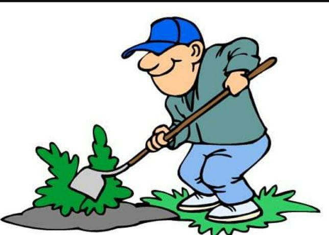 Wykonam wszelkie prace ogrodowe, wycinka drzew