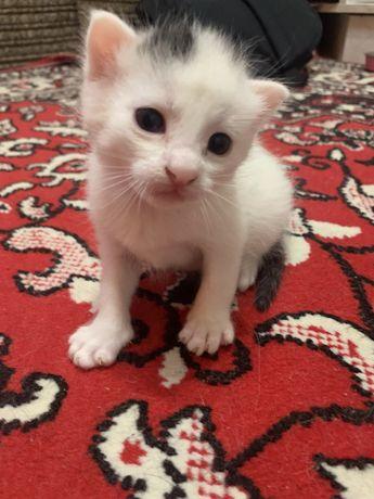 Мега харизматичные котята в добрые руки
