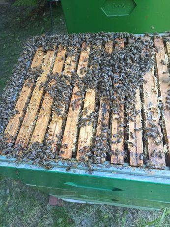 Pszczoły,młode rodziny