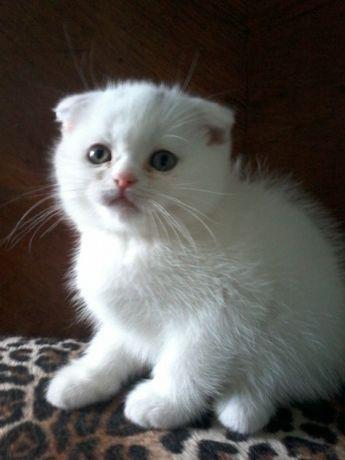 Продам кошенят різного окрасу.