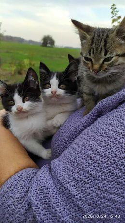Котенок ищет свою семью !