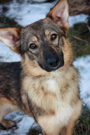 Лиана, 7 месяцев, собака, собачка, щенок