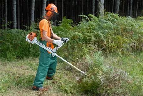 Limpeza Florestal de Terrenos