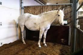 Ściółka dla koni-torfowa. Dostawa w cenie cały kraj