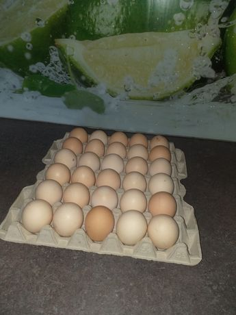 Jajka od wiejskich kur