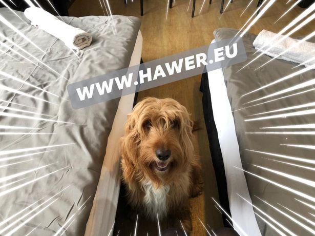 AKCEPTACJA MAŁYCH ZWIERZĄT Hawer - noclegi, hostel Ostrów Wielkopolski