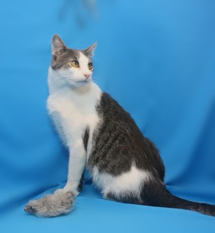 Кот Саймон глазами цвета янтаря очень ласковый
