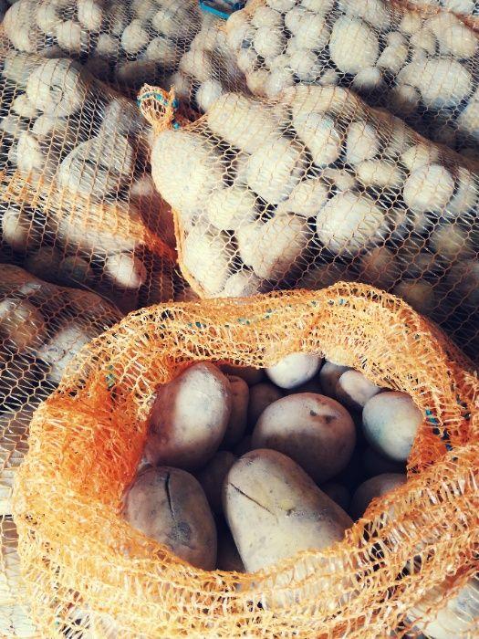 Ziemniaki odpadowe, pasza dla zwierząt Księżpol - image 1
