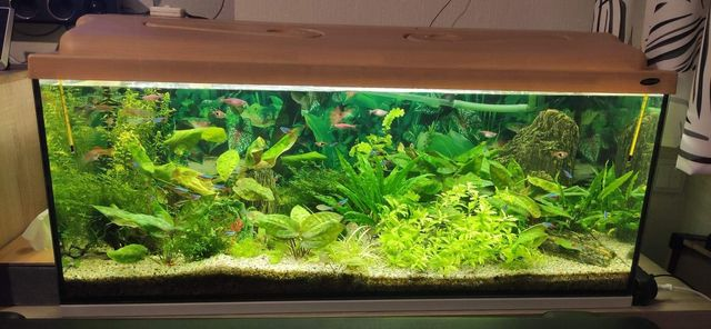 Akwarium z pokrywa 160l