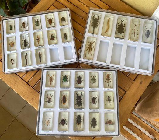 Coleção Insetos Insectos embalsamados em resina